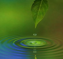 What is Counselling & Psychotherapy. Library Image: Leaf and Water