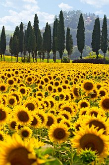 Ethics and Training. Library Image: Sunflower Field